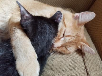 Jack and Salem nap